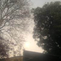 Neblina vespertina