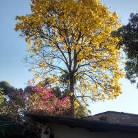 Folhas d'ouro